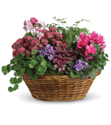 Simply Chic Mixed Plant Basket Flower Delivery